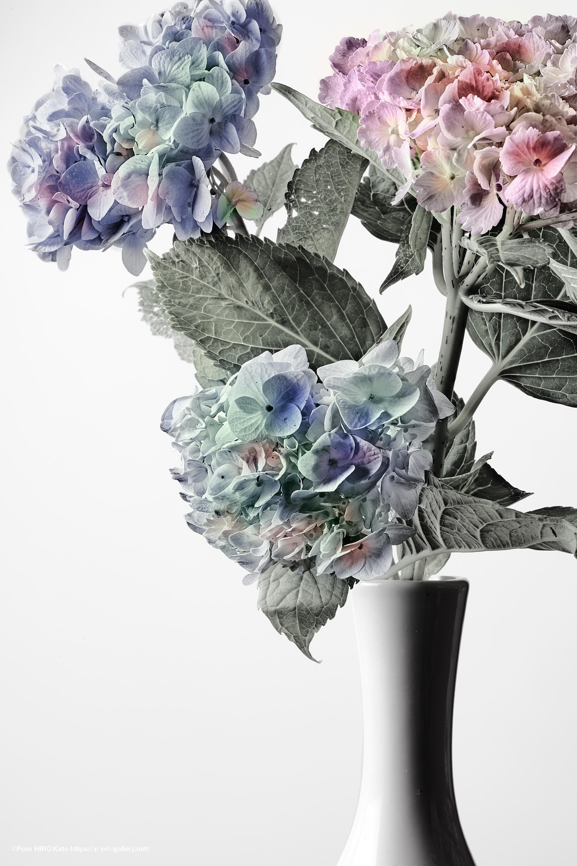 紫陽花 オリジナルプリント作品